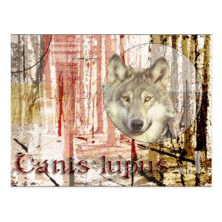 El lobo (lupus de canis) postal
