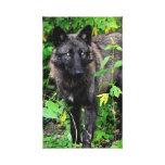 El lobo negro estiró la impresión de la lona impresiones en lona estiradas