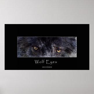 El lobo negro observa el poster de la fauna