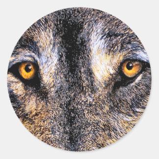 El lobo observa a los pegatinas pegatina redonda