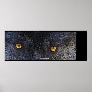 El LOBO OBSERVA el poster del arte de la fauna