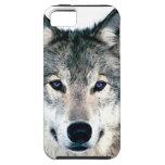 El lobo observa en estampado de animales salvaje d iPhone 5 cárcasas