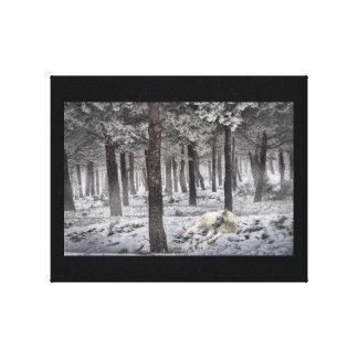 """El lobo que descansaba en la nieve 10"""" x 8"""" lona estirada galerías"""