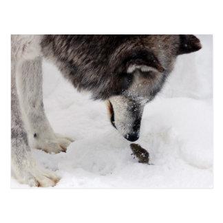 El lobo resuelve el ratón postal