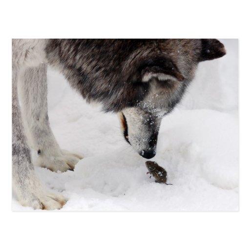 El lobo resuelve el ratón postales