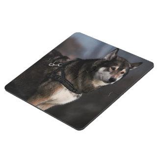 El lookin del perro de trineo tiene gusto del lobo posavasos de puzzle