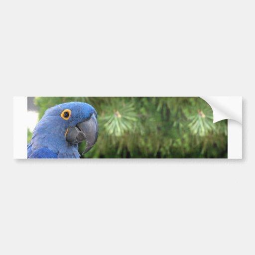 El loro azul de Helaine Etiqueta De Parachoque