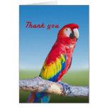 El loro del Macaw le agradece cardar Felicitacion