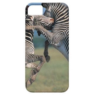 El luchar de las cebras (burchelli del Equus) Funda Para iPhone SE/5/5s