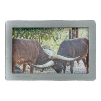 El luchar del ganado de Ankole Hebilla De Cinturón Rectangular