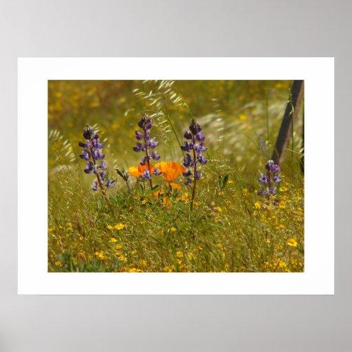 El Lupine florece el altramuz floral del prado de Póster