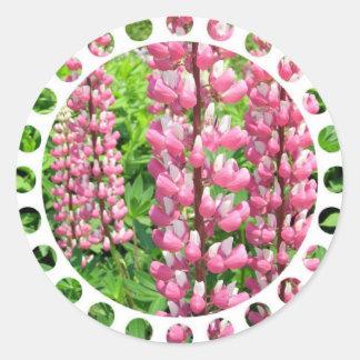 El Lupine rosado florece al pegatina