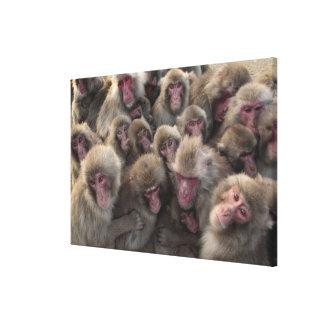 El macaque japonés (fuscata del Macaca) amontonó Impresión En Lienzo Estirada