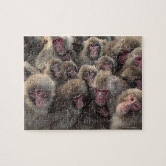 El macaque japonés (fuscata del Macaca) amontonó Puzzle Con Fotos