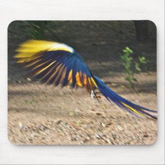 El Macaw Azul-y-Amarillo toma vuelo Alfombrilla De Ratones