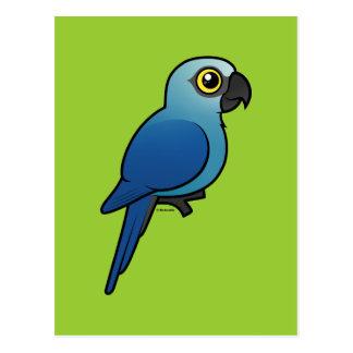 El Macaw de Spix Tarjetas Postales