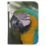 El Macaw del azul y del oro enciende la caja