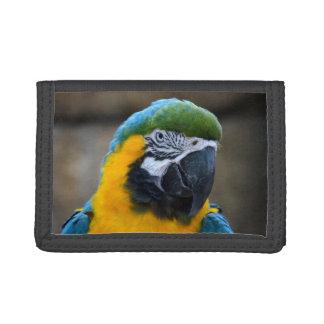 el macaw del azul y del oro repite mecánicamente l