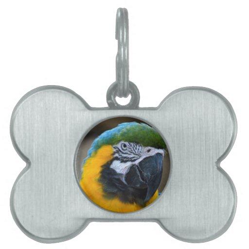 el macaw del azul y del oro repite mecánicamente l placas de nombre de mascota