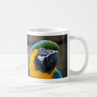 el macaw del azul y del oro repite mecánicamente taza básica blanca