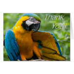 El Macaw le agradece Notecards Felicitacion