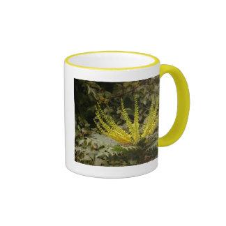 El Mahonia amarillo florece la taza