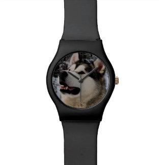 El Malamute de Alaska mira en cualquier momento Relojes De Mano