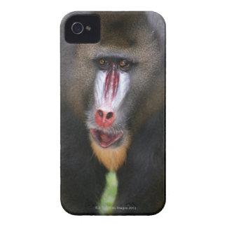 El mandril (esfinge del Mandrillus) se cierra para iPhone 4 Protectores