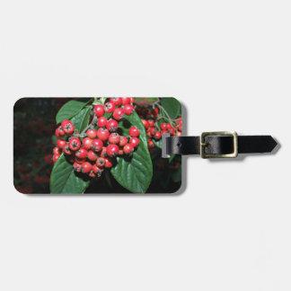El manojo de madura bayas rojas etiqueta para maleta