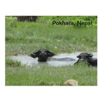 El mantener fresco Pokhara Postal