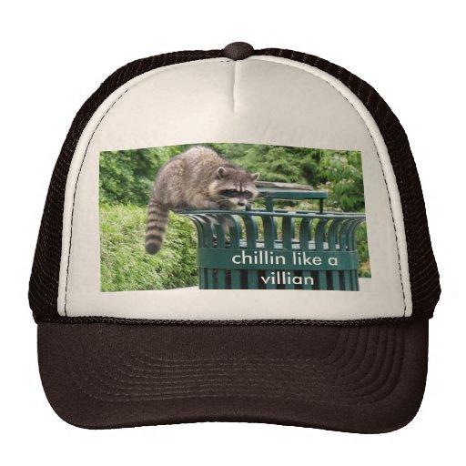el mapache, chillin tiene gusto de un malvado gorra