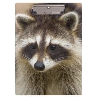 El mapache, lotor del Procyon, es un extenso,