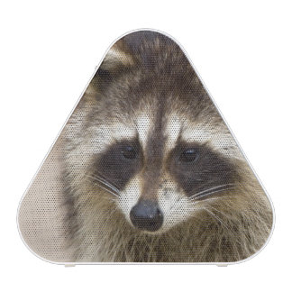 El mapache, lotor del Procyon, es un extenso, Altavoz