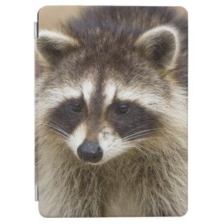 El mapache, lotor del Procyon, es un extenso, Cubierta De iPad Air