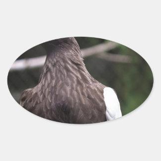 El mar Eagle de Steller Pegatina Ovalada