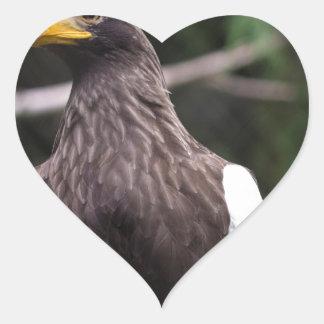 El mar Eagle de Steller Pegatina En Forma De Corazón