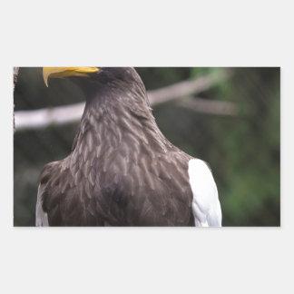 El mar Eagle de Steller Pegatina Rectangular