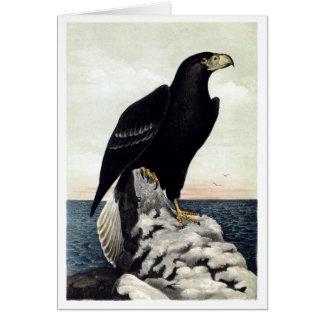 El mar Eagle de Steller Tarjeta De Felicitación