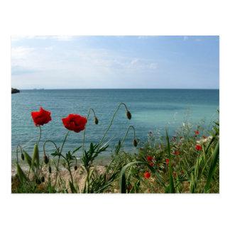 El Mar Negro y amapolas rojas Postal