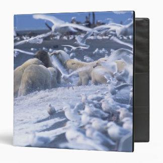 """El maritimus del Ursus de los osos polares), recol Carpeta 1 1/2"""""""