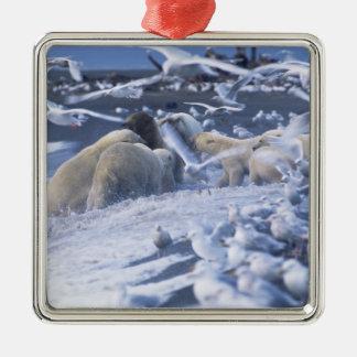 El maritimus del Ursus de los osos polares recol Adornos