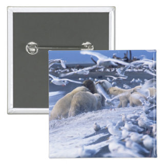 El maritimus del Ursus de los osos polares), recol Pin Cuadrada 5 Cm