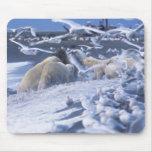El maritimus del Ursus de los osos polares), recol Tapetes De Raton