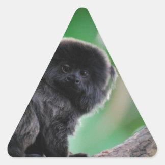El Marmoset de Goeldi Pegatina Triangular