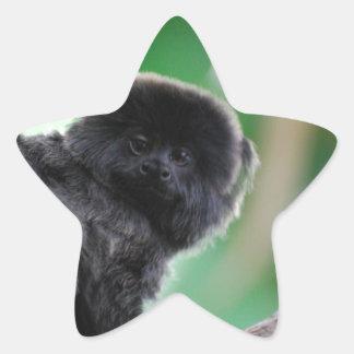 El Marmoset de Goeldi Pegatina En Forma De Estrella