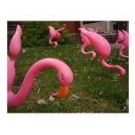 El marzo de la postal rosada de los flamencos