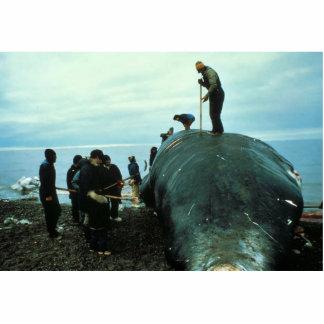 El matar de la ballena esculturas fotograficas