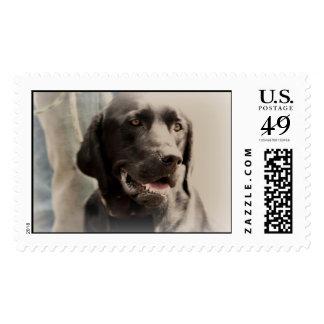 El mejor amigo del hombre - perro negro del sello
