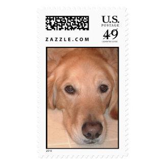 El mejor amigo sellos
