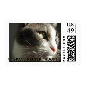 El mensaje de Gabe: Spay y neutralice Sellos Postales